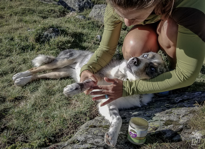 Don't forget to pack a first-aid kit if you plan to take your dog camping.