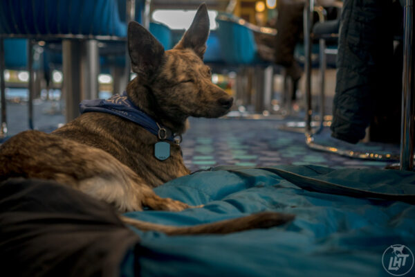 On long travel days, it can be tough to get your dog the physical exercise they need.