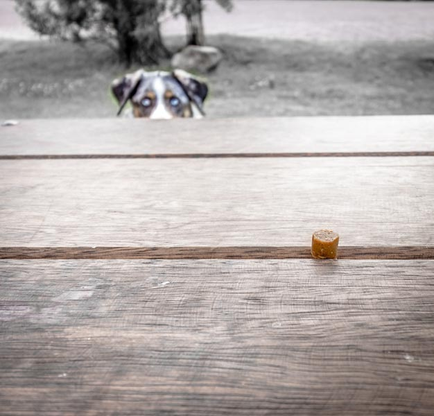 Hiding treats is a great game to play with your dog to tire them out on long travel days.