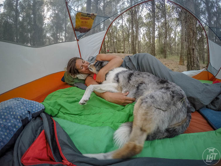 Camping is one of the most dog-friendly ways to travel.