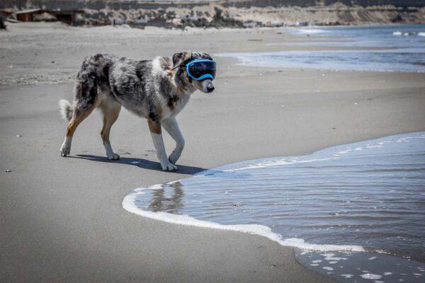 Sora wearing RexSpecs at the beach.
