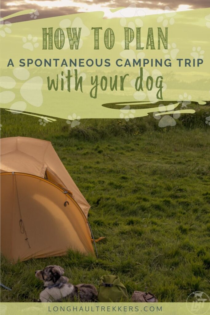 Plan a spontaneous camping trip with your dog.