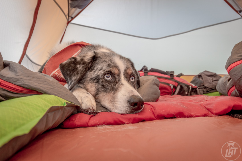 Sora in the tent