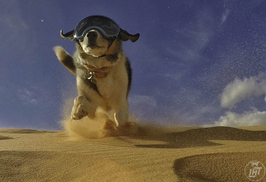 Eye protection for dogs will keep sand out of their eyes.