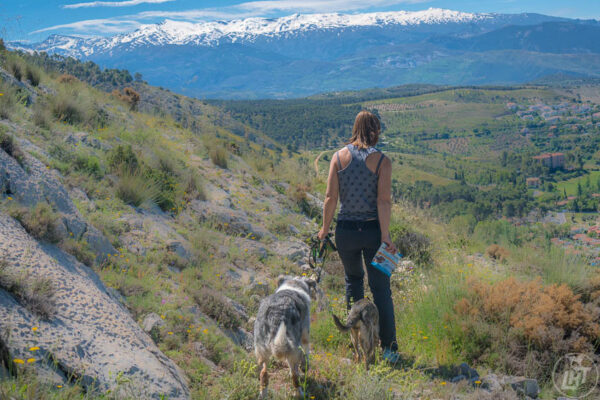 Do you know which trail encounters may be toxic to dogs?