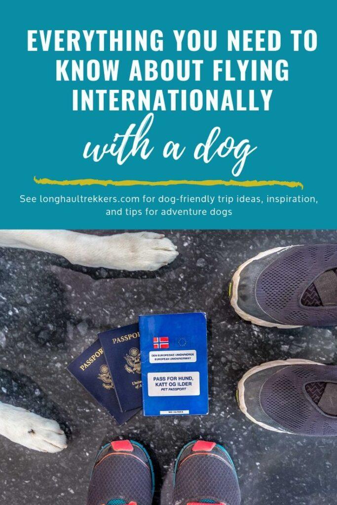 Flying internationally with a dog Pinterest image