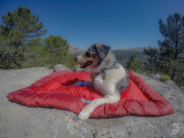 Kurgo Wander Loft Bed