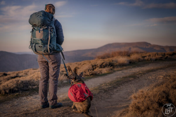 10 Essentials for Hiking with Dogs