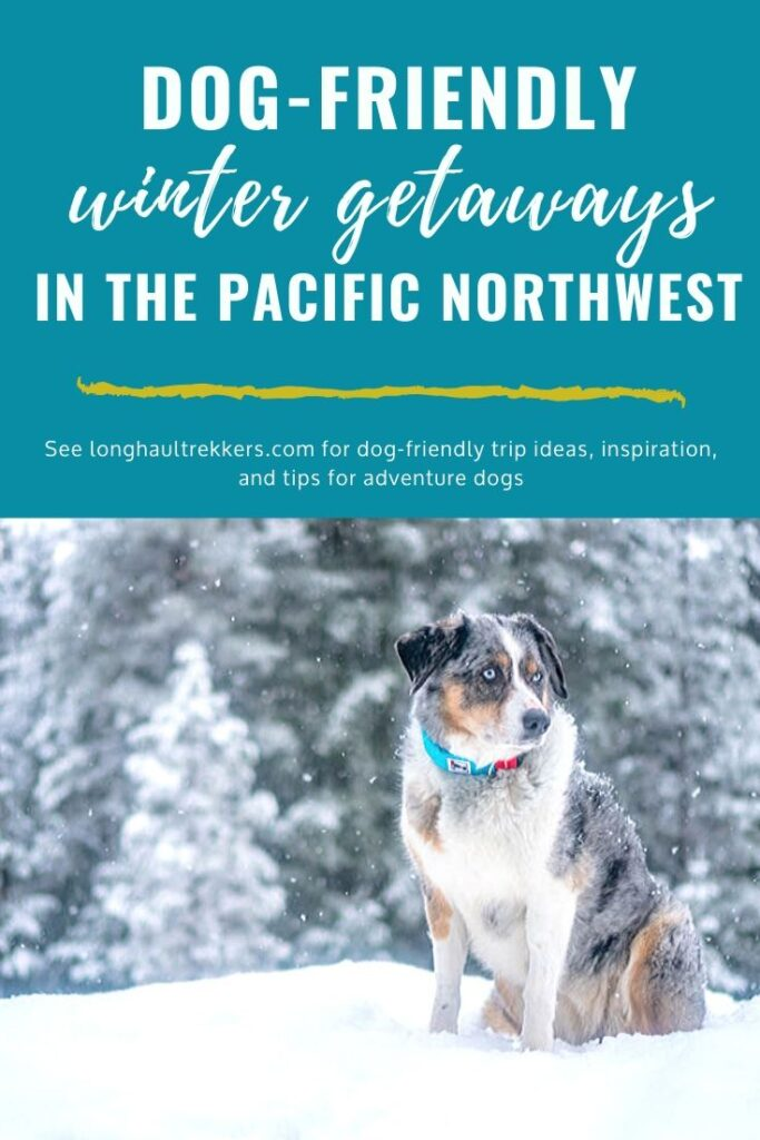 Dog-Friendly Winter Destinations in the Pacific Northwest Pinterest Image