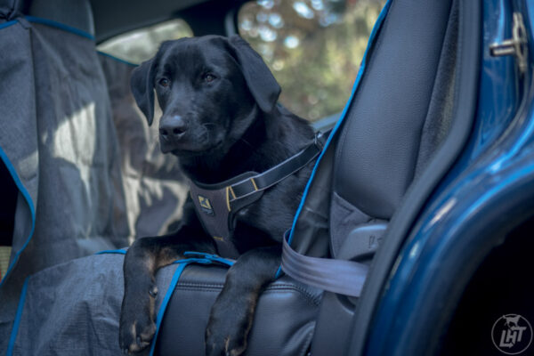 Kurgo Dog Car Safety Harness