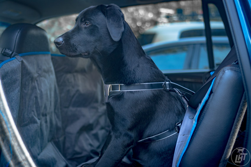 Kurgo Impact Dog Car Safety Harness