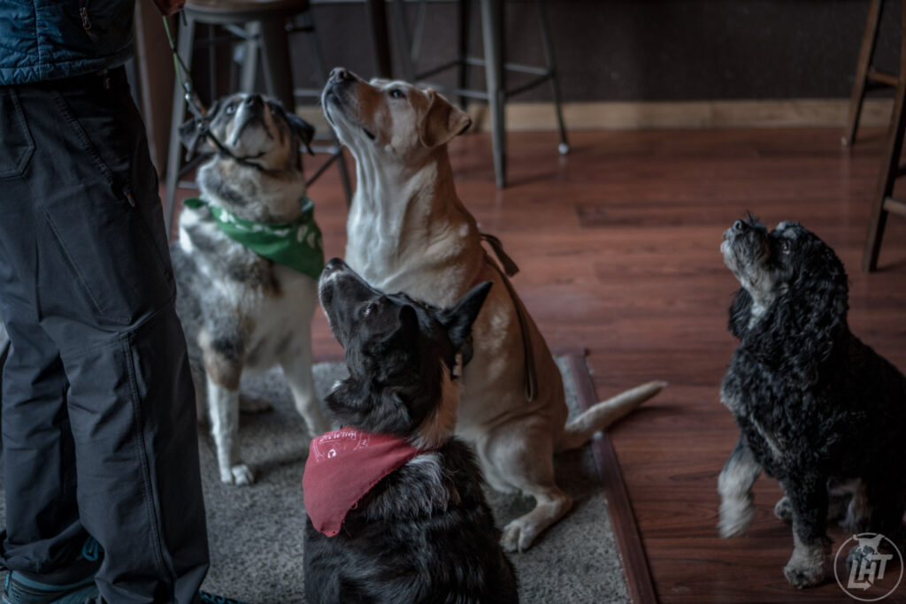 Visit one of the many dog-friendly breweries in the Seattle during the winter months.