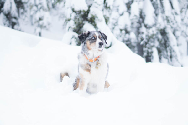 Dog-Friendly Winter Destinations in the Pacific Northwest