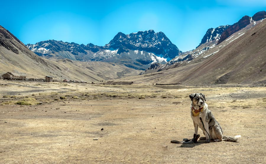 Hiking in the Peruvian mountains with an Australian Shepherd.