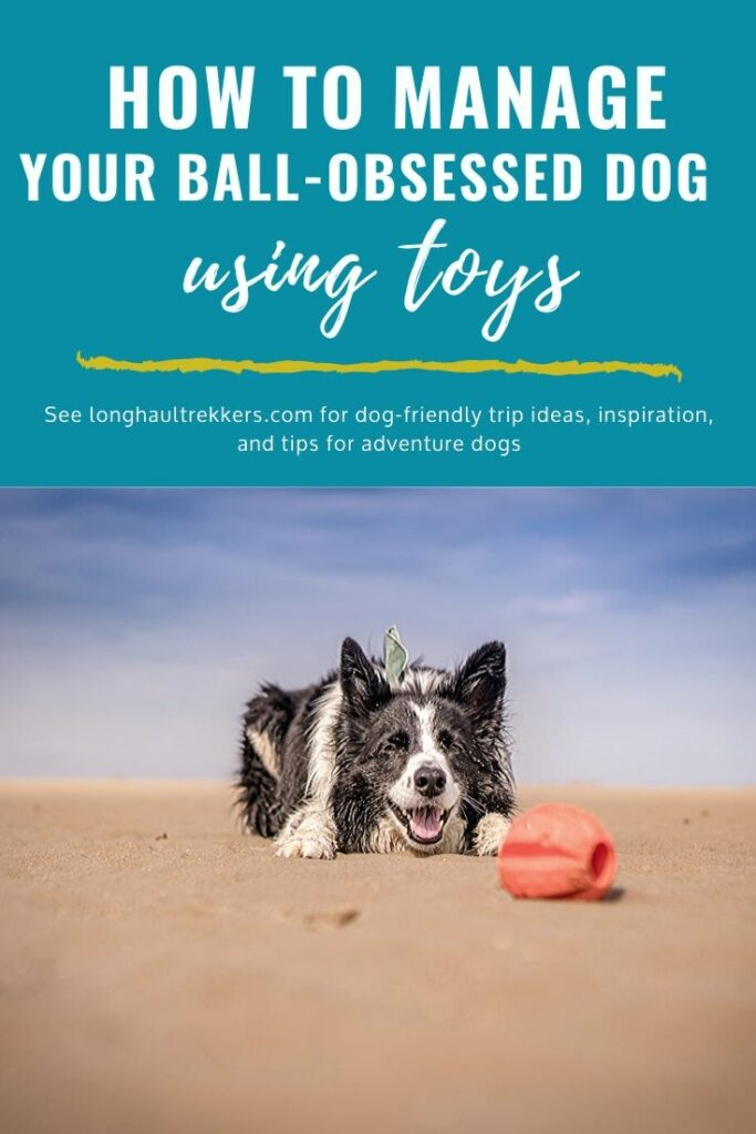 Managing your ball obsessed dog using toys Pinterest image