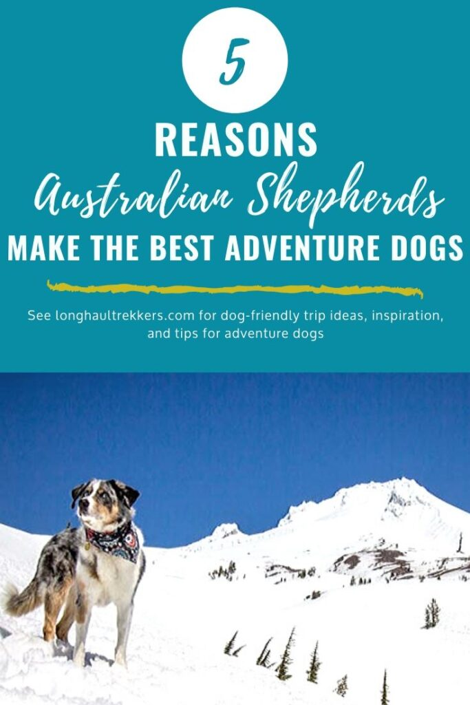 Australian Shepherds are the Best Adventure Dogs Pinterest Image
