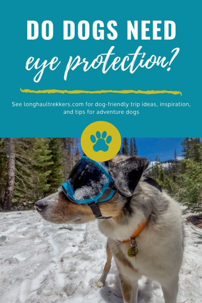 Rex Specs dog goggles help protect dogs' eyes from harmful UV rays and damage from the elements