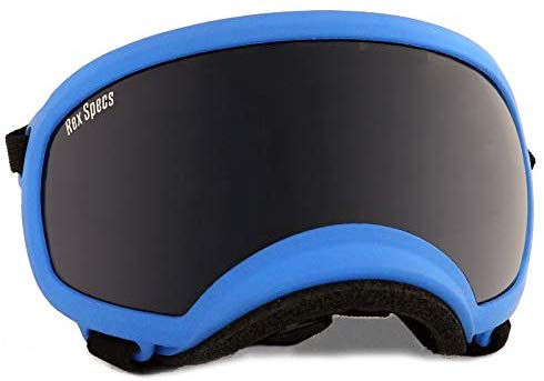 A pair of Rex Specs dog goggles will protect your dog's eyes