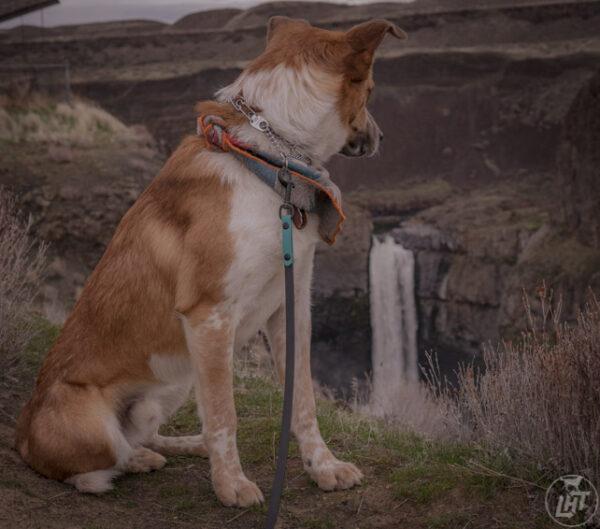 traffic leash waterproof material Dog handle