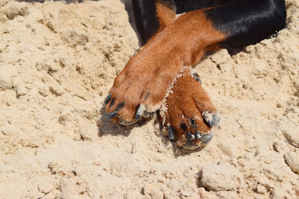 Using paw wax in the sand can help prevent chafing between your dog's toes.