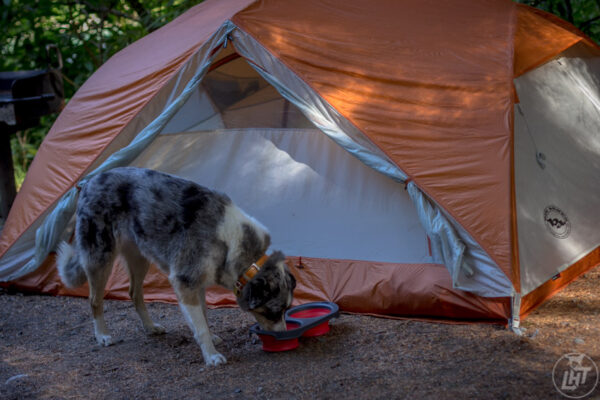 Dog eating in front of a tent