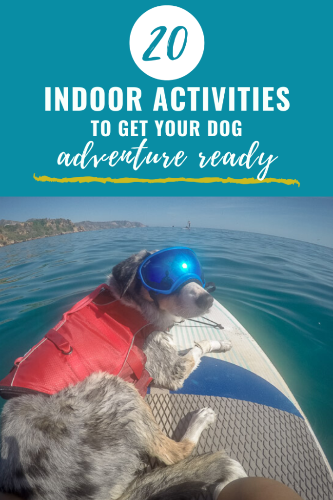 20 Indoor Dog Activities pinterest Image