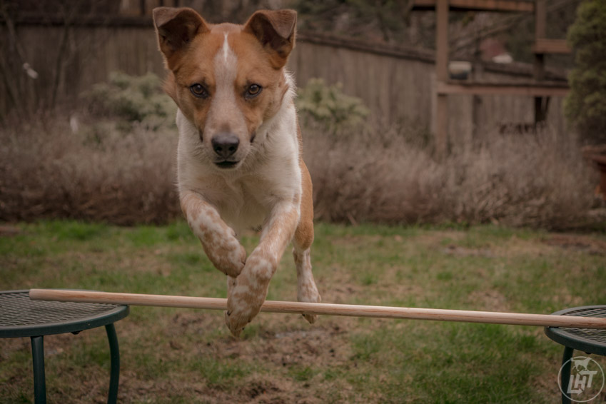 Indoor dog activities like agility will keep both you and your dog entertained.