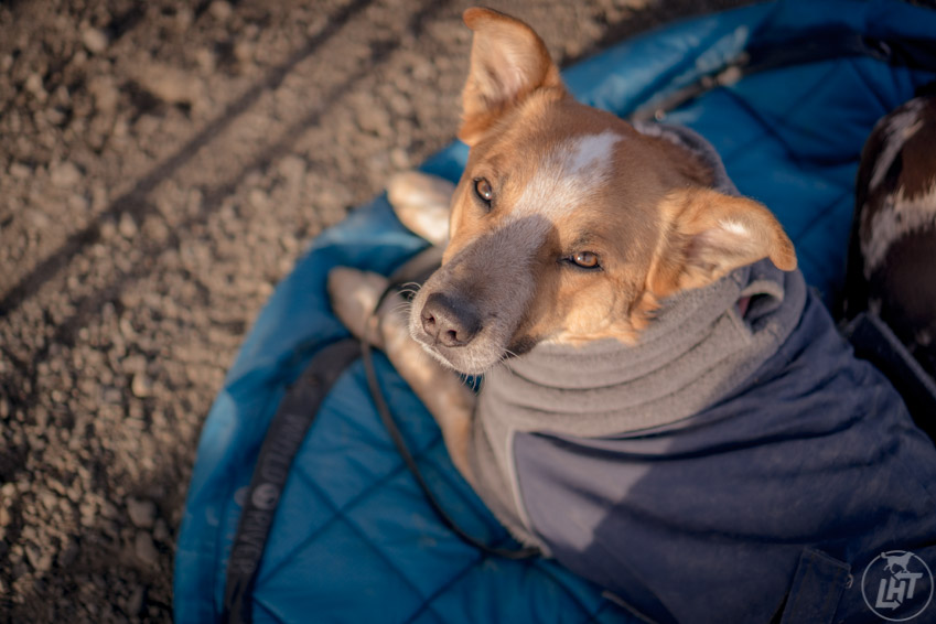Practicing place is a great indoor dog activity that translates to outdoor adventures.