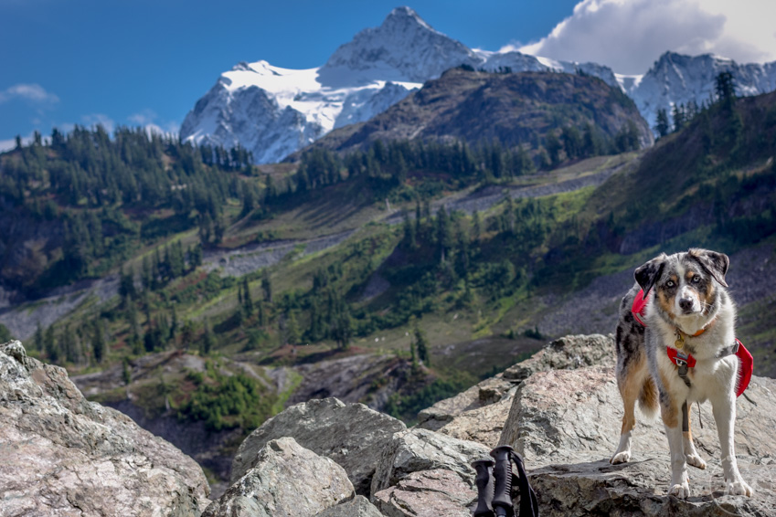 Get your dog used to wearing a backpack indoors to prepare for your next trip.