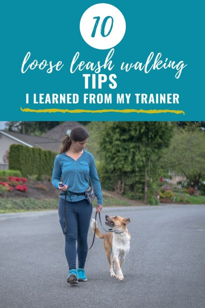 Loose Leash Walking Tips from My Trainer