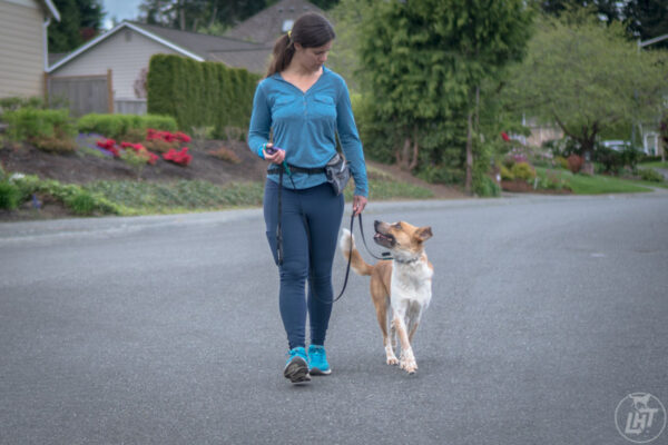 Sitka and I practice loose leash walking in our neighborhood