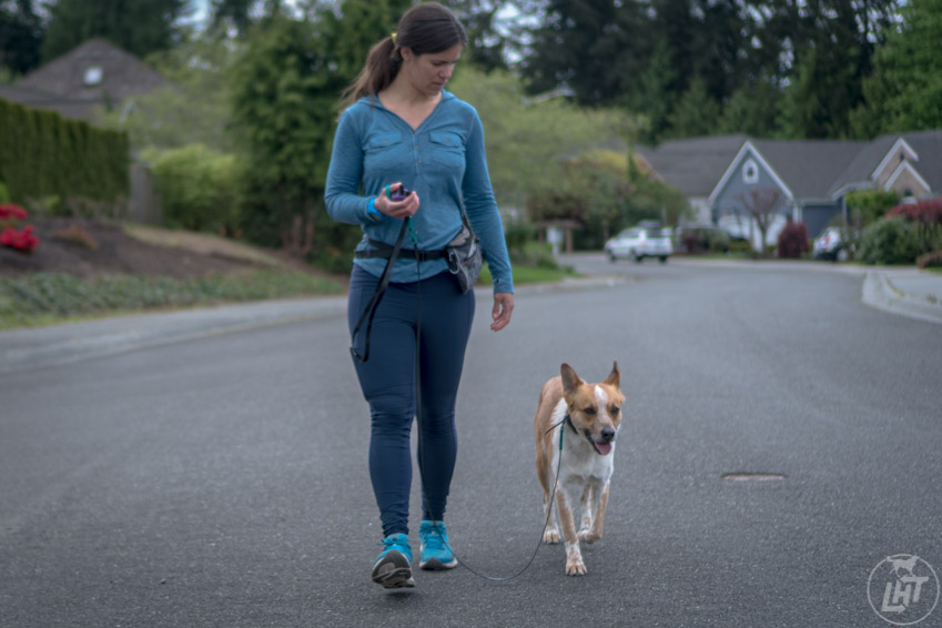 Going out equipped with the right tools will ensure a higher success rate for loose leash walking.