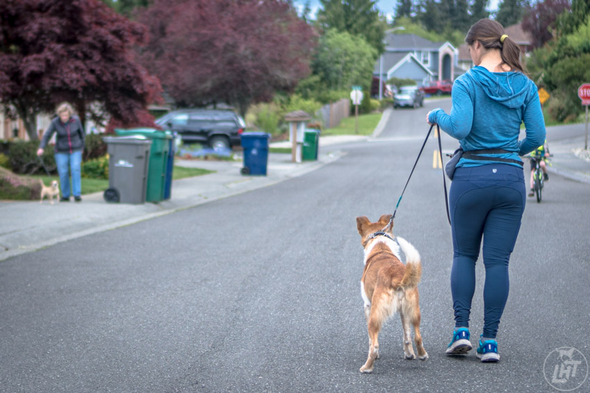 Learning to read your dog's body language is key for a successful dog walk.