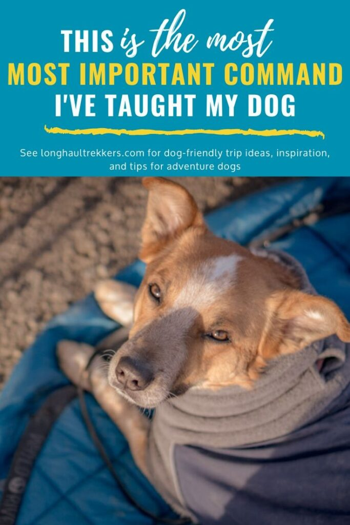 The place command is one of the most important commands to teach your dog.