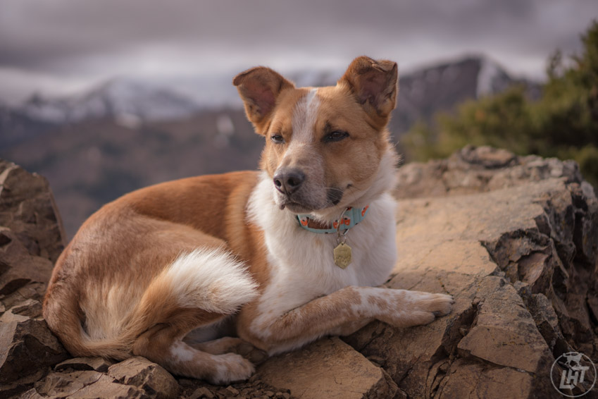 Sitka chills in place on a pile of rocks while I snap his photo.