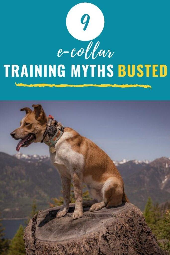 9 E-Collar Training Myths Busted