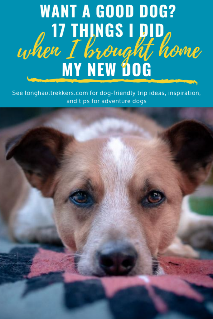 17 Tips to Implement When You Bring Home a New Dog pinterest
