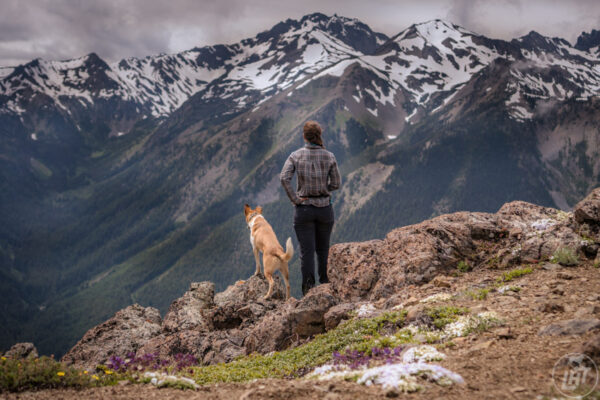 A dog friendly guide to the Olympic Peninsula