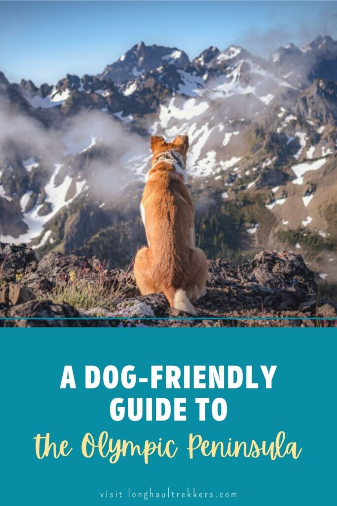 A dog-friendly guide to the Olympic Peninsula Pinterest Image