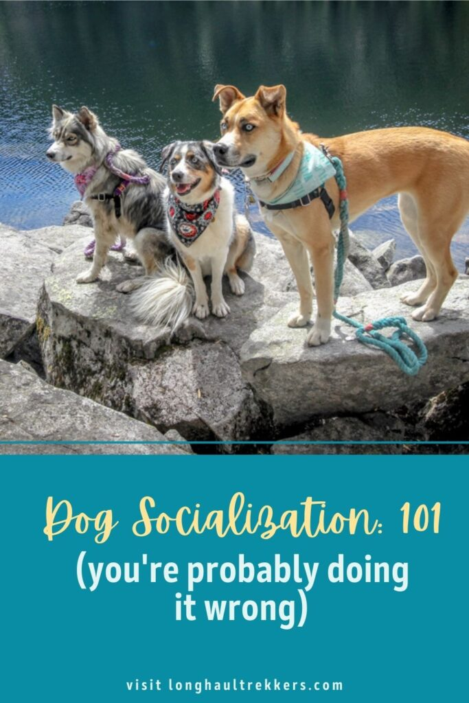 Dog Socialization 101 Pinterest Image
