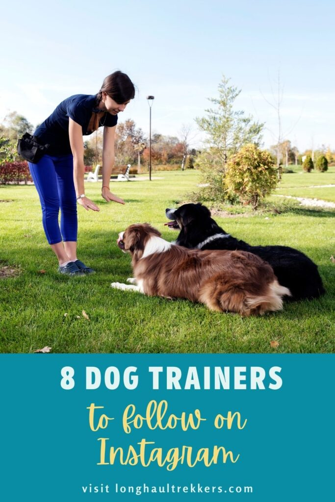 8 Dog Trainers to Follow on Instagram Pinterest Image