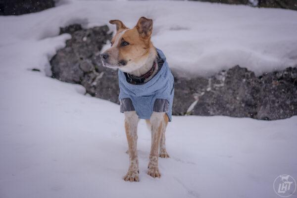 Hurtta Dog Coat