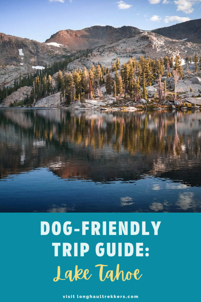 Dog-friendly Guide to Jackson Hole Pinterest Image