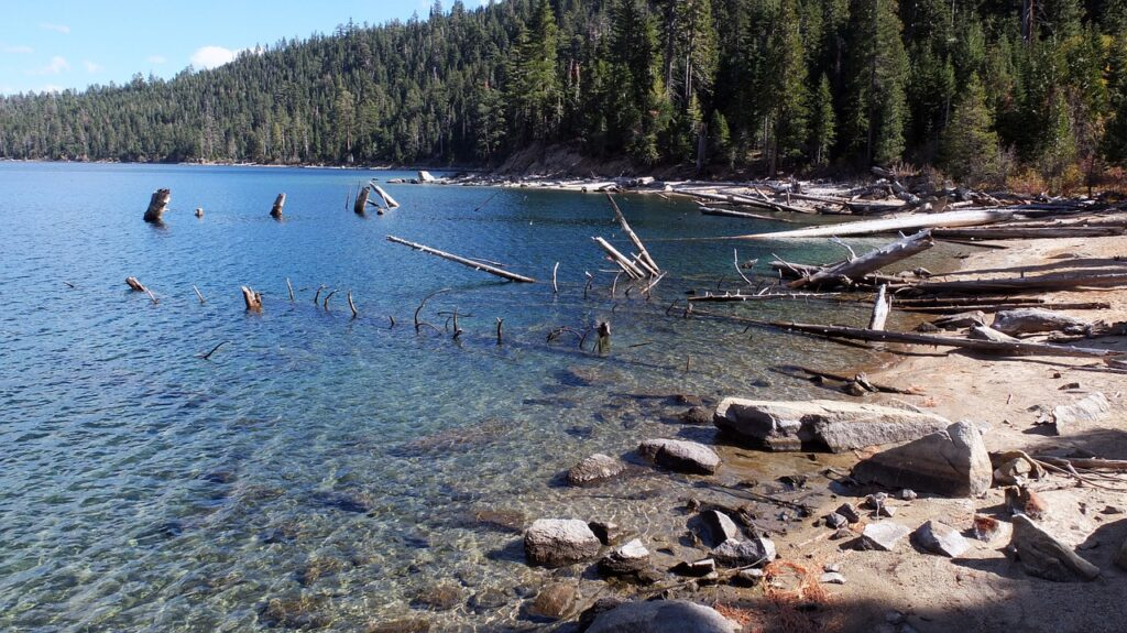 Dog friendly beaches in Lake Tahoe