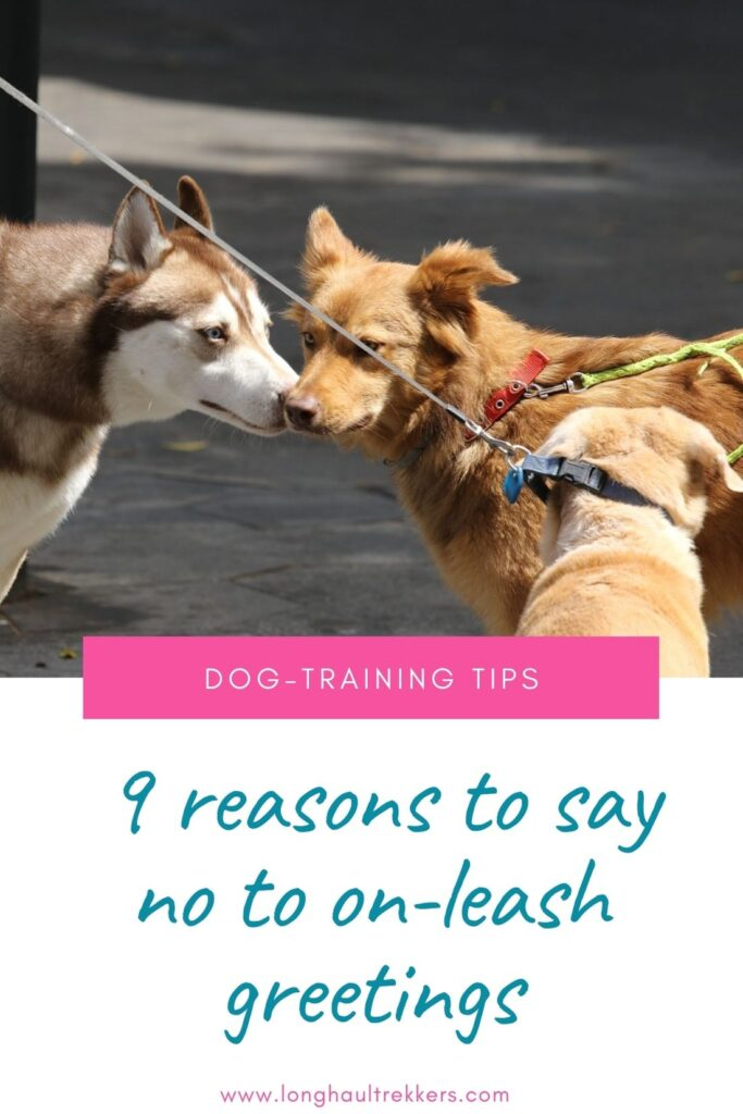 9 Reasons to Just Say No to On-Leash Greetings Pinterest Image