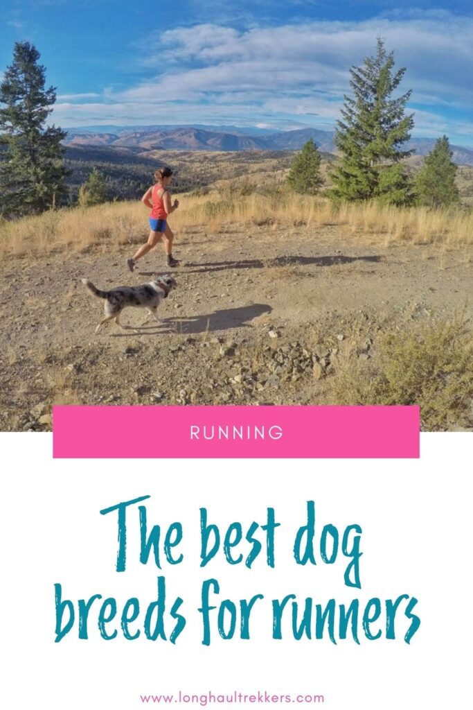 The Best Dog Breeds for Running Pinterest Image