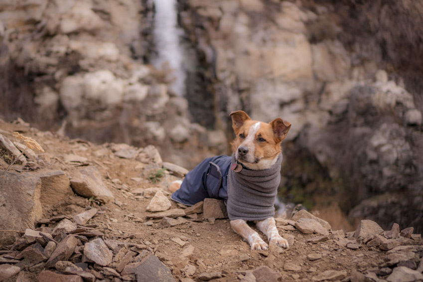 Sitka wears his Voyagers K9 Winter Coat on a chilly hike.