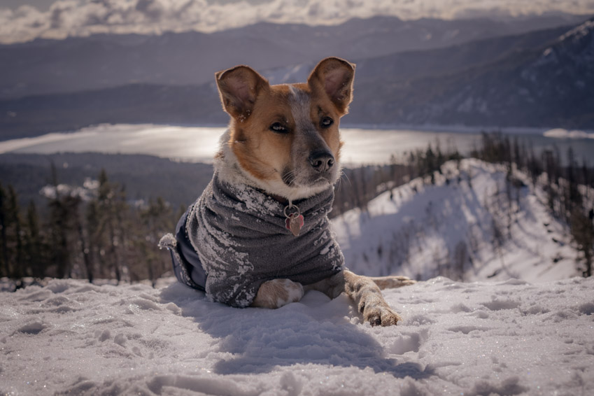 The Voyagers K9 Winter Coat is a well designed jacket for dogs.