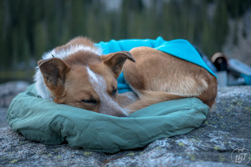"""Sitka relaxes on """"place"""" at camp while I set up my tent. Place is one of the essential dog training commands I use on a daily basis."""