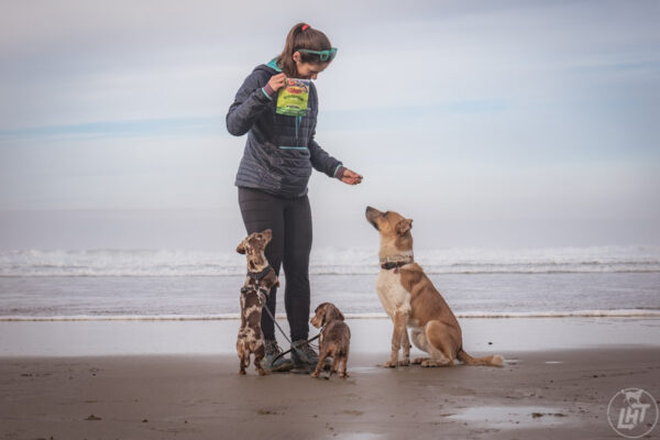 Using treats to train a few dogs on the beach.